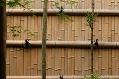 vägg för bakgrundsbambubruk Royaltyfria Bilder