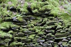 vägg för bakgrundsmossrock Arkivbilder