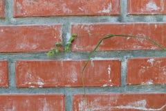 vägg för bakgrundstegelstenred Arkivfoton