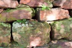 vägg för fernsmossrock royaltyfri fotografi