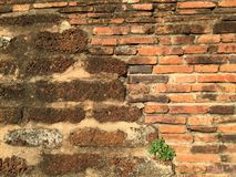 Vägg för forntida tempel av Ayutthaya Royaltyfria Bilder