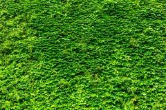 Vägg för grön växt arkivbild