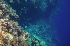 Vägg för korallrev med den tropiska fisken Djupt undersea landskap Arkivfoton