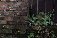 Vägg för röd tegelsten av den gamla övergav fabriken Arkivfoton
