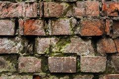 Vägg för tegelsten för Grungebakgrund som gammal ridas ut och ifrån varandra falls Cementinterlayersna mellan tegelstenarna täckt Royaltyfria Bilder