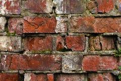 Vägg för tegelsten för Grungebakgrund som gammal ridas ut och ifrån varandra falls Cementinterlayersna mellan tegelstenarna täckt Royaltyfri Foto