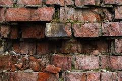 Vägg för tegelsten för Grungebakgrund som gammal ridas ut och ifrån varandra falls Cementinterlayersna mellan tegelstenarna täckt Royaltyfri Fotografi