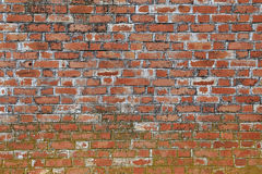 vägg för textur för bakgrundstegelsten riden ut gammal Royaltyfri Fotografi