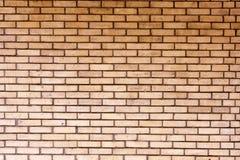 vägg för textur för bakgrundsväxt liten Arkivfoto