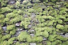 Vägg för torr sten som täckas tungt i mossa i sjöområdet royaltyfri bild