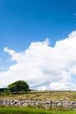 Vägg för träd och för torr sten på en jordbruksmark, lodlinje Royaltyfri Fotografi