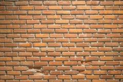 vägg för trädgård för framdel för tegelstenbrownblomma Fotografering för Bildbyråer