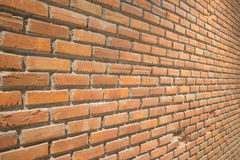 vägg för trädgård för framdel för tegelstenbrownblomma Royaltyfri Fotografi
