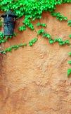 vägg för vine för tegelstendruva gammal Fotografering för Bildbyråer