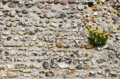 Vägg i blom arkivbild