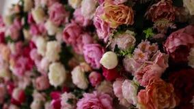 Vägg i vita och rosa rosor arkivfilmer