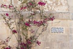 Vägg med blommor i medelhavs- stil Fotografering för Bildbyråer