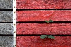 Vägg med murgrönaen Royaltyfri Fotografi
