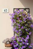 Vägg med sixty-three nummer och blommor Royaltyfri Fotografi