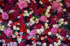Vägg med variation av blommor, rosor, nejlikor, vanliga hortensior Royaltyfri Fotografi