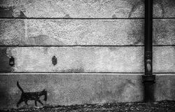 Vägg och en katt Arkivfoto