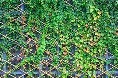 Vägg och gröna växter royaltyfri fotografi