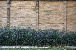 Vägg som dekoreras med gruppen av blommor Fotografering för Bildbyråer