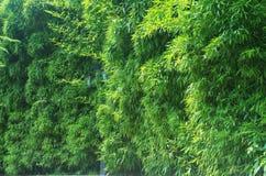 Väggen av bambu Royaltyfri Fotografi