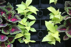 Väggen dekorerade vid färgrika växter i huset Royaltyfri Bild