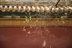 Väggen och den röda forntida arkitekturen för träd av  Royaltyfri Bild