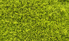 Vägggräsplansidor Royaltyfria Bilder