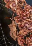 Vägglus på en blomma Fotografering för Bildbyråer