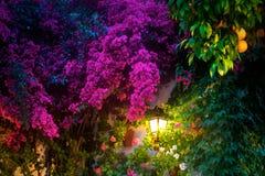 Vägglykta som omges av färgrika blommor royaltyfri fotografi