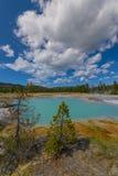 Väggpöl i den ljusbruna handfatet Yellowstone Fotografering för Bildbyråer
