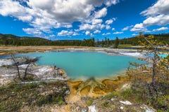Väggpöl i den ljusbruna handfatet Yellowstone royaltyfria foton