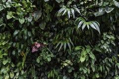 Väggträdgård, lodlinjeträdgård Arkivfoto
