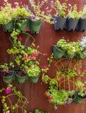 Väggträdgård som monteras på ett ark av rostigt stål royaltyfria bilder