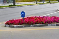 Vägmärkepil Tecken för trafik för gaffelföreningspunkt på vägen med blomsterrabatten Blått bifurkationtecken med två pilar Royaltyfri Foto