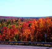 Vägren Autumn Colors - överlägsen nationalskog Arkivbild
