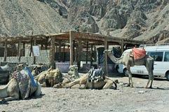 Vägrenbeduinkafé egypt Royaltyfri Bild