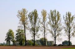 Vägrentrees Royaltyfria Bilder