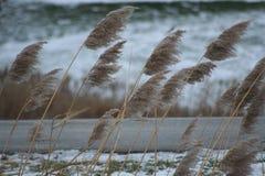 Vägrenväxter som böjer i vinden Arkivbild