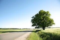 vägsommar Fotografering för Bildbyråer