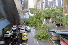 Vägtrafik hindras av tömda träd Arkivfoto