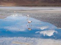 Vägtur i Anderna Arkivfoto
