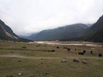 Vägtur till den Yumthang dalen, Sikkim INDIEN, 15th APRIL 2013: Y Royaltyfri Bild
