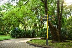 Vägvisare-, gångbana- och naturträd royaltyfria bilder