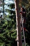 Väl Holland - 02/25/2018: Trädpruner som gör hans arbete arkivfoto