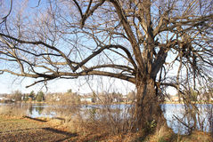 väldig tree för höst Royaltyfria Bilder