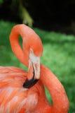 välformad flamingo Royaltyfria Foton